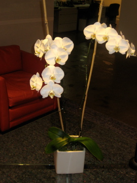 Orchids, Flower arrangement, uncouth gourmands