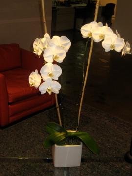 Orchids, Flower arrangement, uncouth gourmands